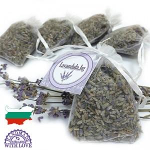 lavender-bg-nati-molci